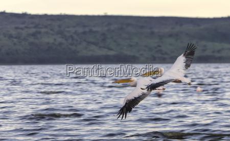 fahrt reisen vogel nationalpark kenia outdoor
