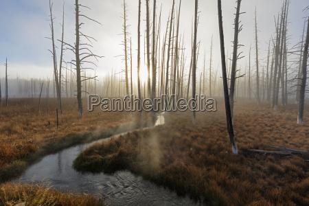 usa yellowstone national park creek winding