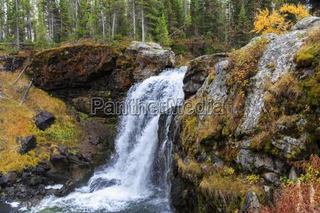 usa yellowstone national park moose falls