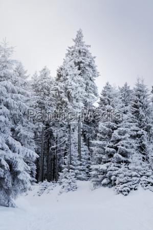 jazda podrozowanie drzewo zima zimowy niemcy