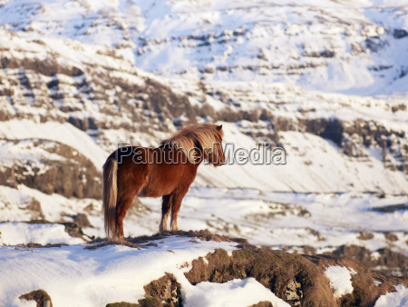 fahrt reisen pferd ross winter tier