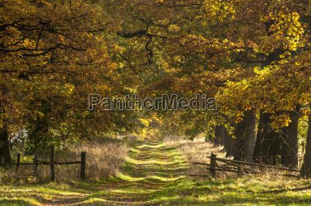 germany hesse idyllic avenue in autumn