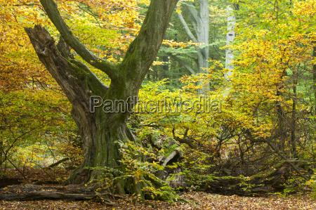 blatt baumblatt baum laubbaum deutschland brd