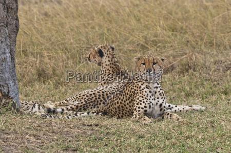 tier nationalpark afrika kenia outdoor freiluft