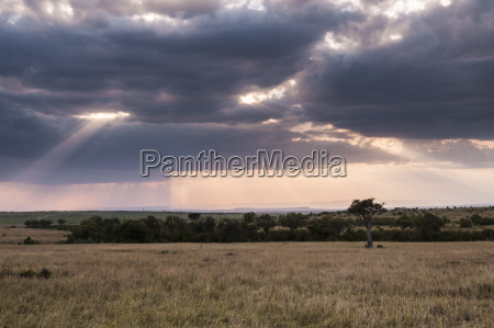 fahrt reisen baum afrika kenia savanne