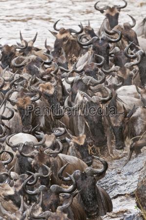 afrika kenia maasai mara national park