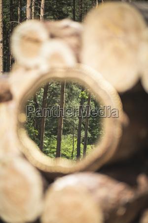 spiegelbild der baeume im wald