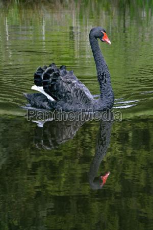 tier vogel schwarze schwarz das schwarze