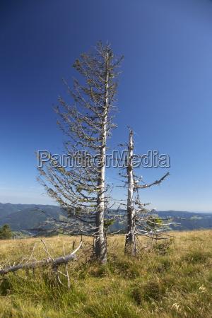 germany baden wuerttemberg black forest belchen