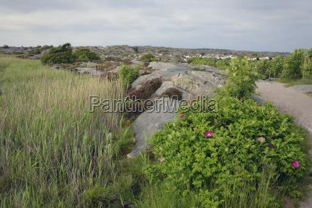 schweden kungshamn skerry landschaft