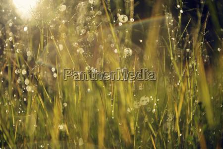fahrt reisen regentropfen schweden sonnenlicht outdoor