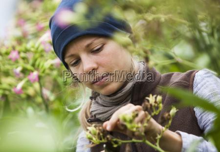 oesterreich schiltern alternativgaertner bei tabakpflanze