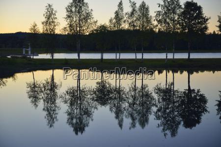 sweden storuman birch trees at lake