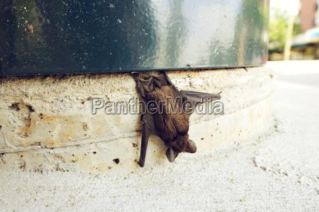 usa south carolina columbia dead bat