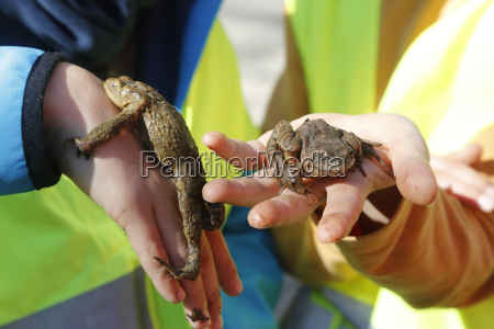 germany freiburg girl holding toads during