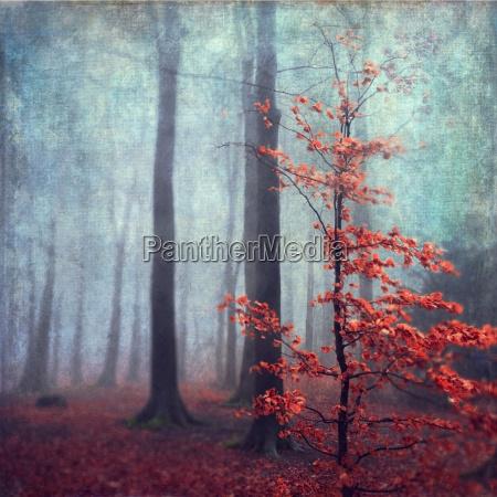 lisc drzewo liscie lisciaste mgla niemcy