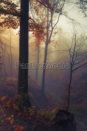 deutschland nahe wuppertal laubwald im herbst