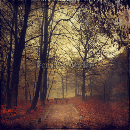 germany near wuppertal deciduous forest with