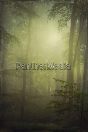 germany near wuppertal beech forest and