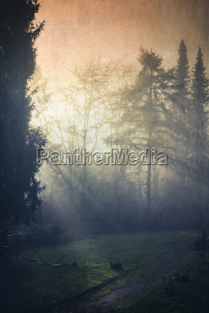 germany forest glade in morning light