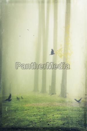 hooded crows on meadow foggy digitally