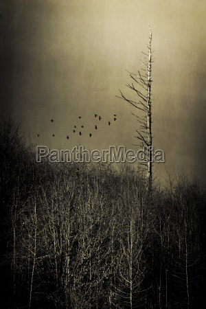 forest in winter flying birds digitally