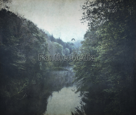germany wuppertal wupper river and forest