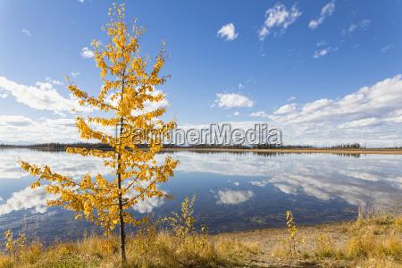 usa alaska view of yarger lake