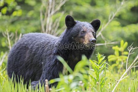 tier saeugetier baer nationalpark kanada outdoor
