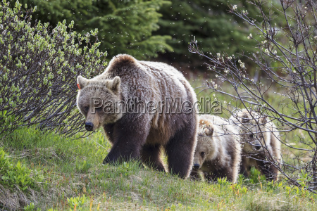kanada alberta jasper und banff nationalpark