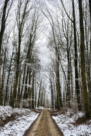 germany constance district forest track through