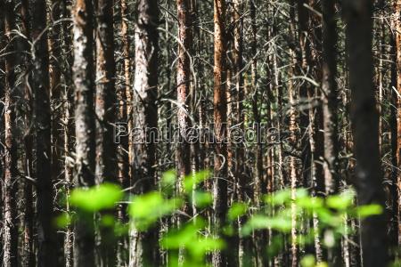 deutschland sachsen wald mit neuen pflanzen