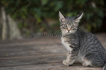 croatia vrsar cat