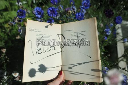 escrever flor planta lindas flores inflorescencia
