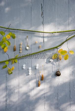 stilleben blatt baumblatt sonnenlicht mauer outdoor