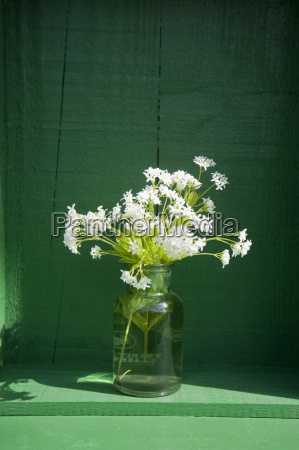 old glass bottle with blossoming woodruff