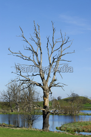 germany view of bare tree against
