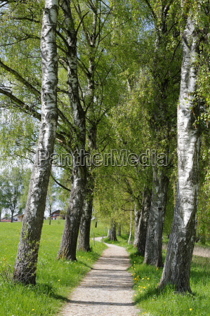 germany treelined with pathway