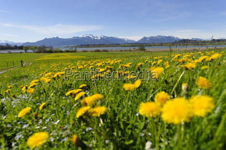germany bavaria upper bavaria spring at