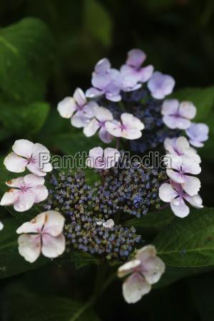 fluessig blume pflanze gewaechs bluete erbluehen