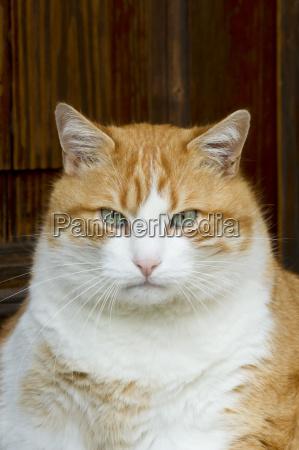 germany baden wuerttemberg cat sitting close