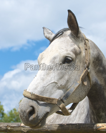 pferd ross tier portrait portraet potrait