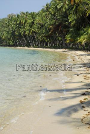 thailand tropischer strand mit palmen auf