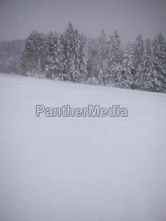 germany black forest winter landscape snowstorm