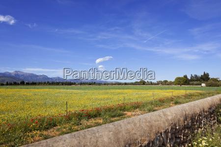 blume pflanze gewaechs landwirtschaft ackerbau wolke