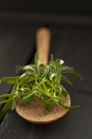 rosemary on wooden spoon close up