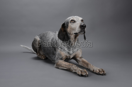 mixed breed dog looking away