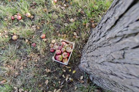 germany rhineland palatinate wooden box with