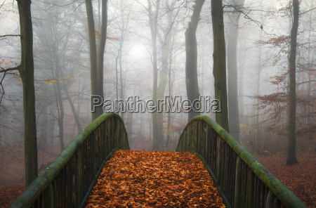 germany hamburg jenischpark in fog wooden