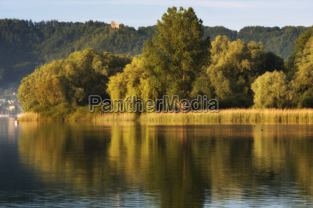 germany view of willow tree near